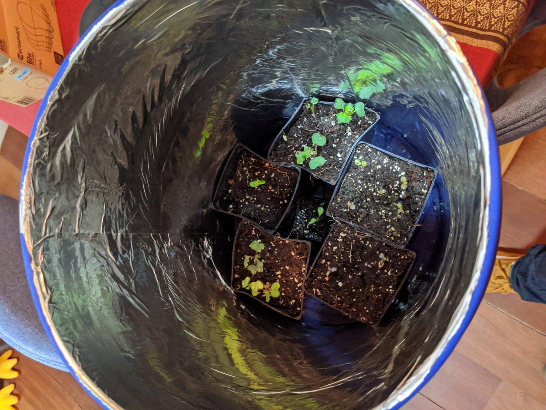 Much Lettuce Machine: Aeroponic, Automatic Grow Box