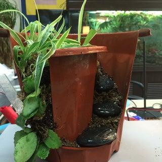 Clay Flower Pot - With a Twist