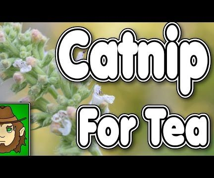 Catnip For Tea, Collection and Brewing!!