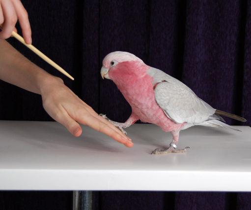How to Train Birds 101