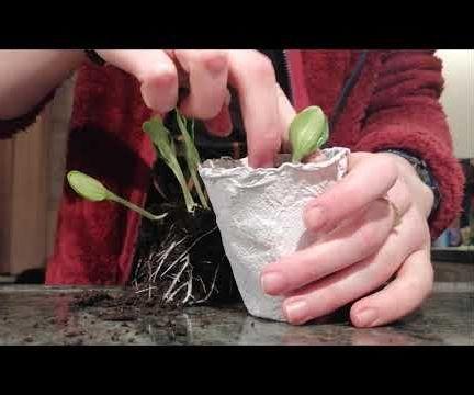 Paper Seeding Jars
