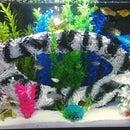 Homemade aquarium tunnel