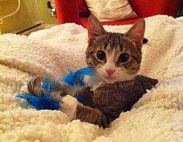 Feather-on-a-Stick Cat Toy