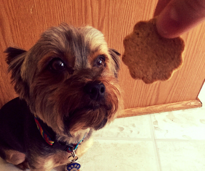 Healthy Grain Free Dog Treats