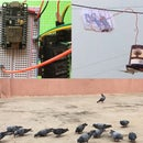 10$ Timer Based Automatic Pigeon Feeder Using NodeMCU.