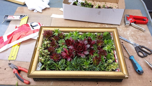 Living Painting Made From Succulents