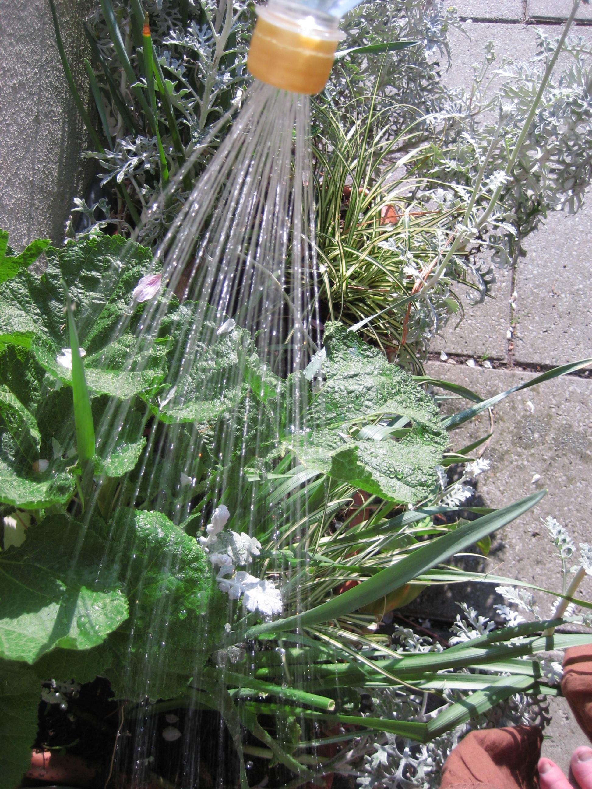 Water bottle sprinkler cap