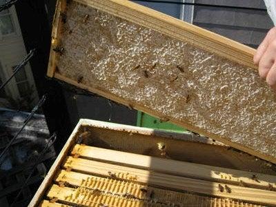 Let's Harvest Some Honey!