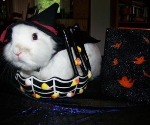 Draimans (my Rabbit) Warlock Costume!
