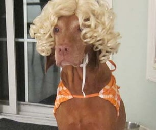 Easy Dog Halloween Costume - Beach Girl