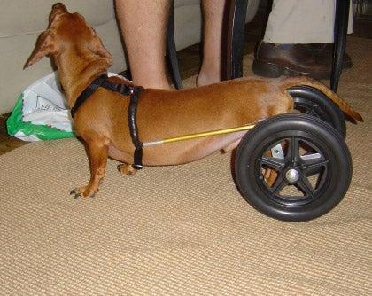 Dachshund Wheelchair