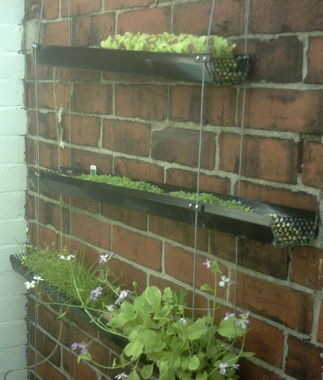 Vertical hydro veg patch