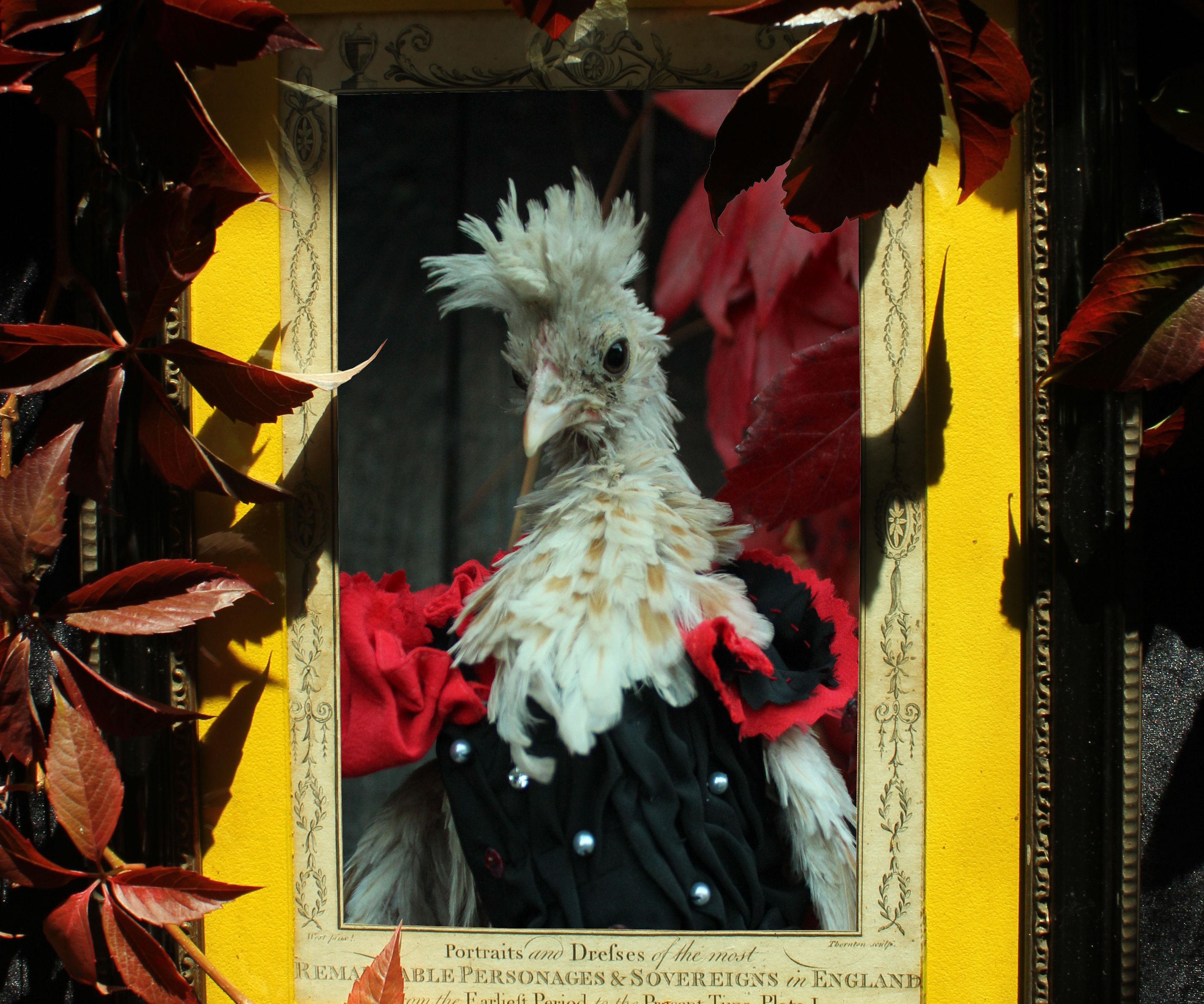 Vampyre Chickens - Halloween Costumes