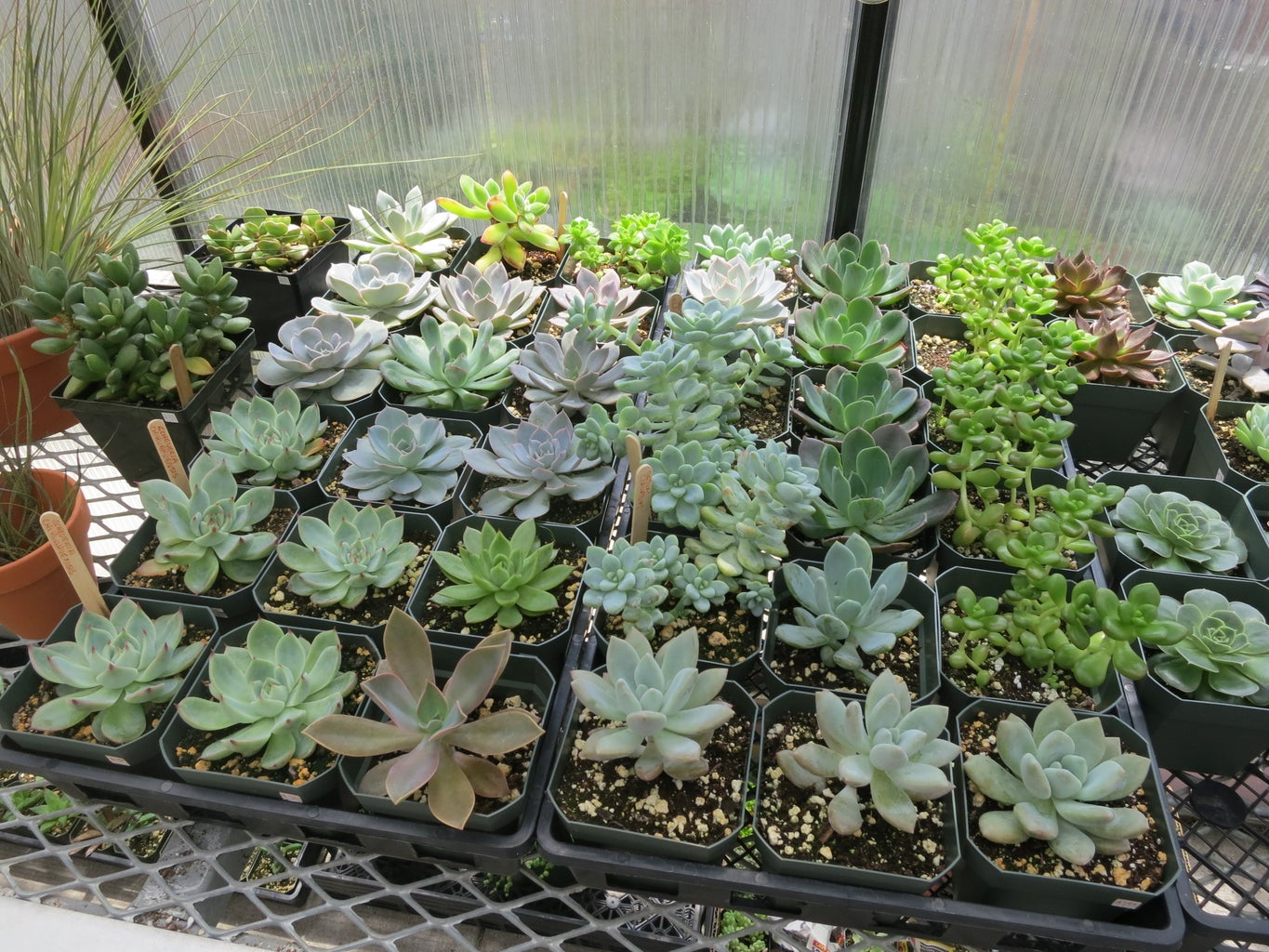 Succulent Display From Thrift Store Finds