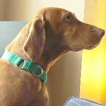 How To Make A Martingale Dog Collar