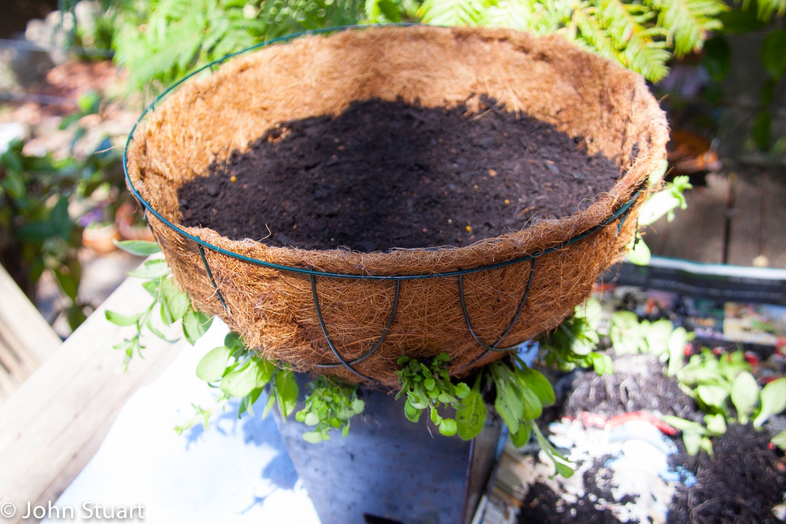 Start Planting