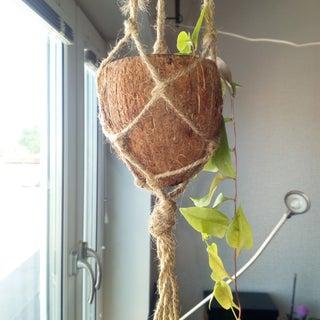 Kokos-ampell.jpg