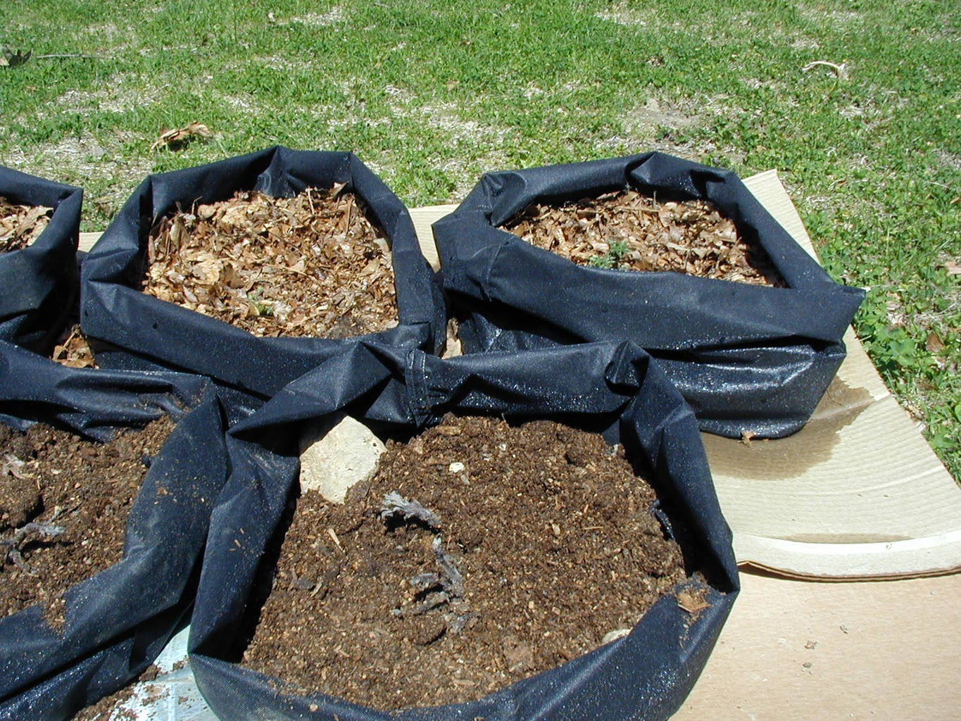 Planting Taters in Totes: