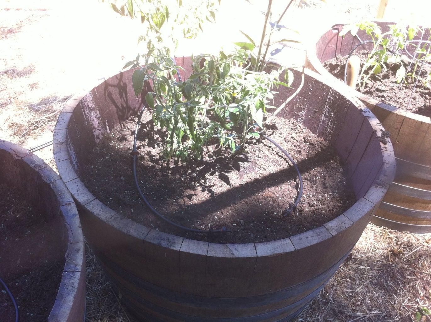 Gravity-Irrigated Barrel Garden