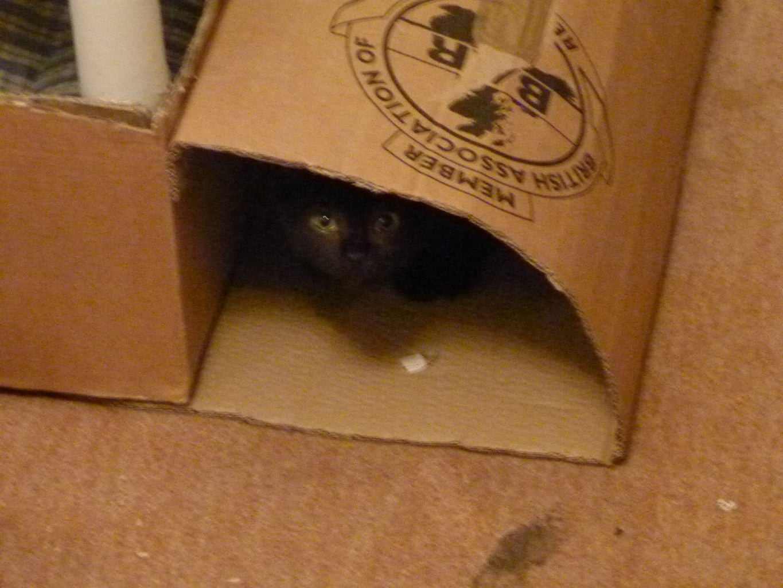 Cat Activity Centre