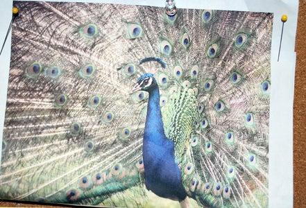 Peacock Pleating