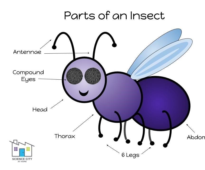 Build a Bug With Playdough!