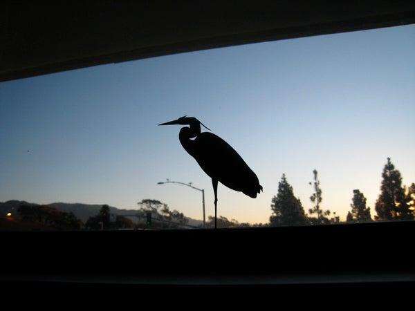 Create Windowzoo.com Birds!