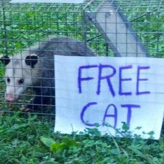 Free Cat.jpg