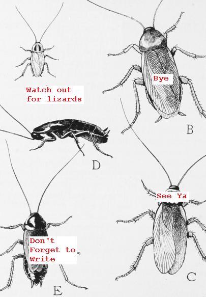 Cockroaches Bye-Bye
