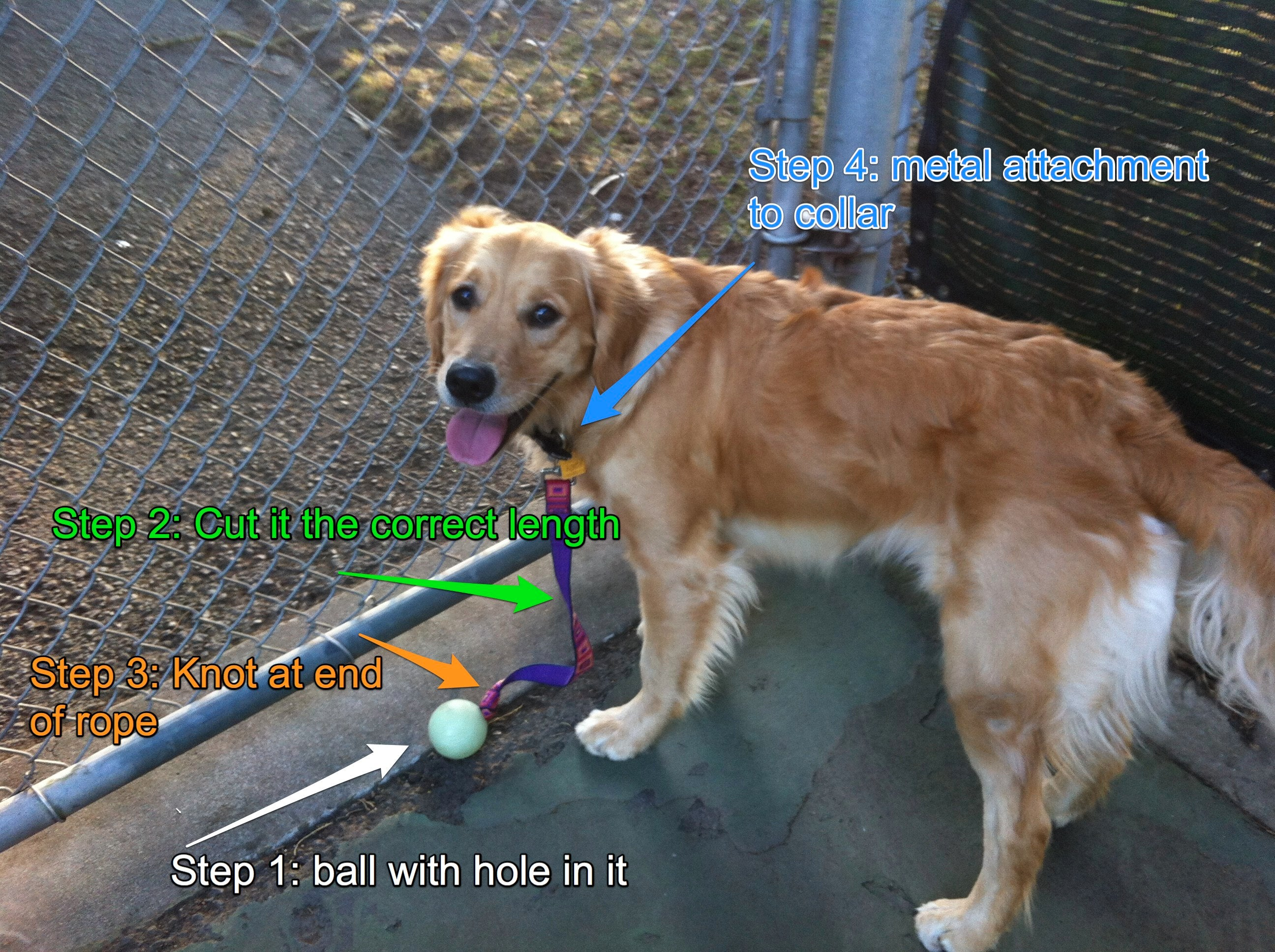 Canine Ball Leash (no More Lost Balls in the Park!) : 4 ...
