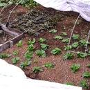 Rustic Minimalist Raised Vegetable Bed