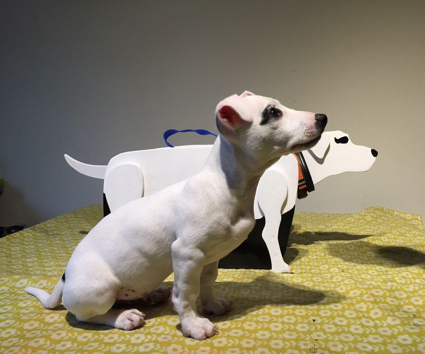 DIY Dog Storage Box