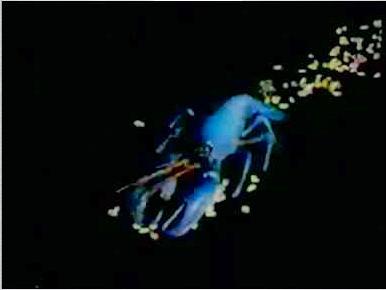 Rock Lobster Computer Prank