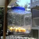 Free, green, solar dehydrator