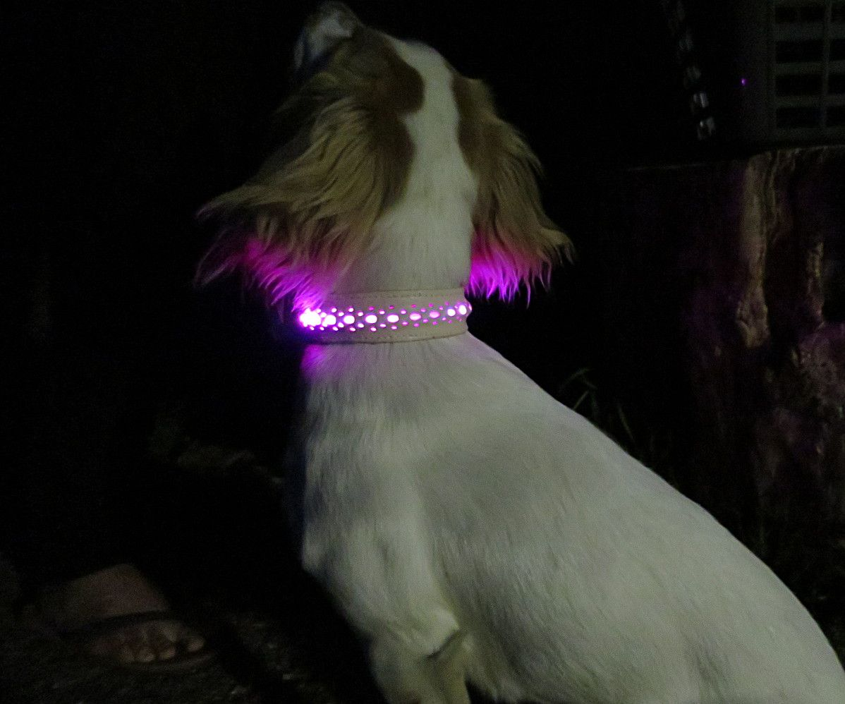 Leather Light-Emitting (LED) Dog Collar