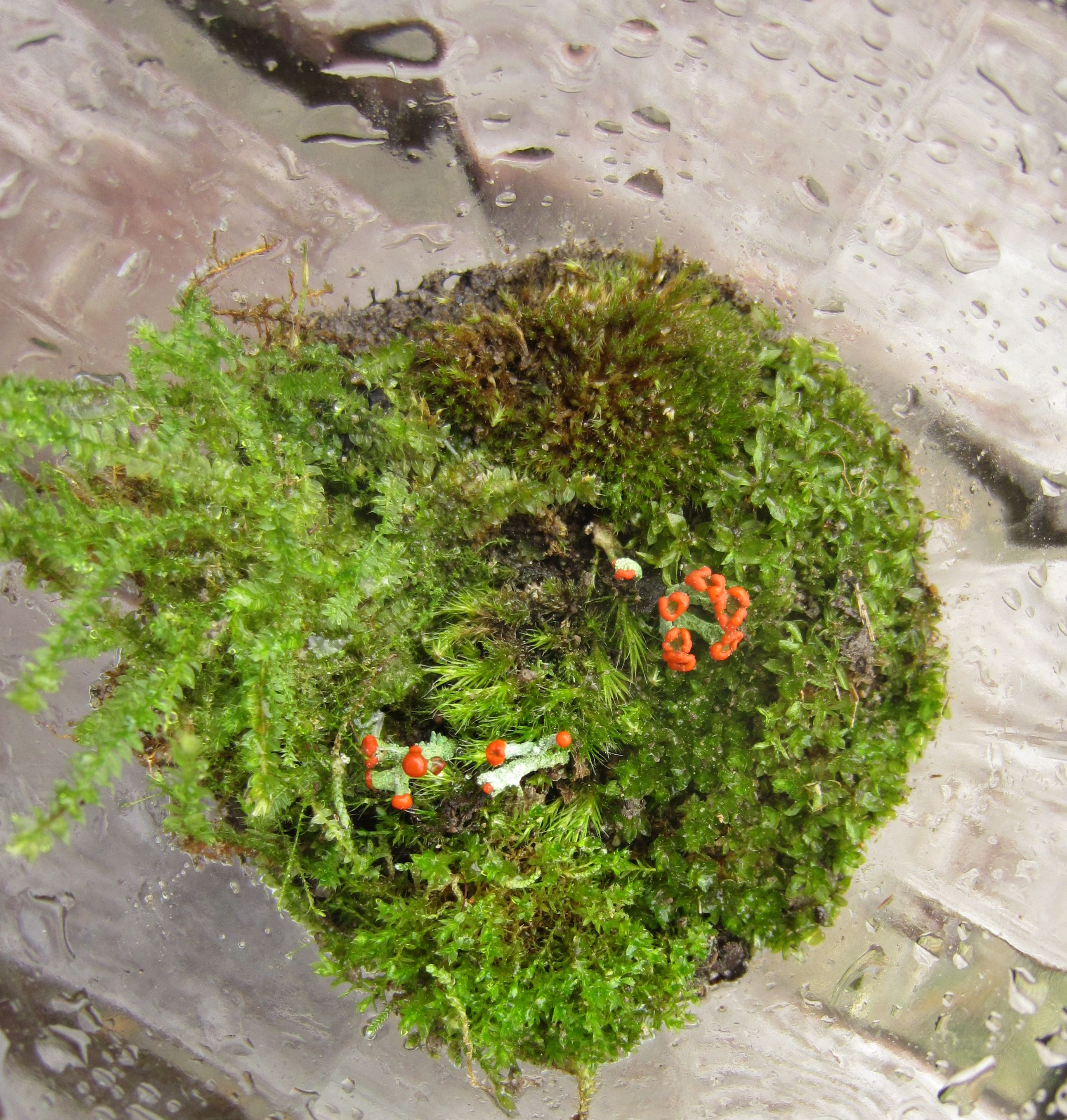 The Basics Of Closed Jar Terrariums 5 Steps With Pictures Instructables