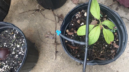 Connecting the Watering Rings and Spray Nozzles