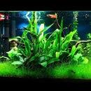 Fish Tank temperature realtime visualiser