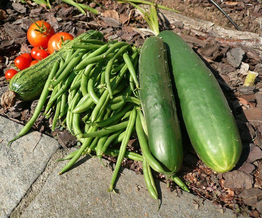 Gardening in Buckets