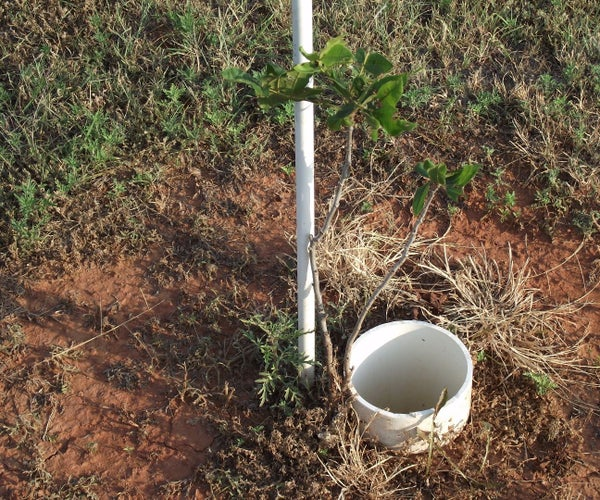 Keeping Pecan Seedling Trees Alive in Dry Conditions