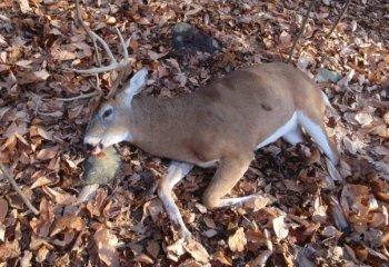 Gutting A Deer Solo