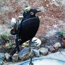 Crow Keyguard