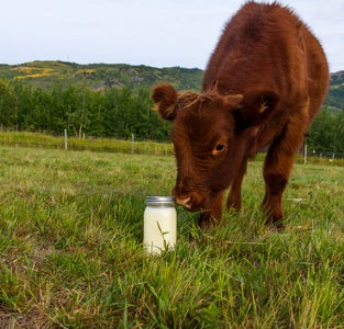 Making Beef Tallow (with a Slow Cooker)