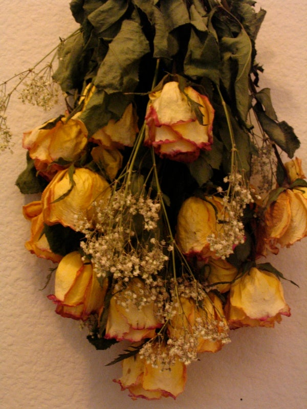 Dried Roses the Easy Way