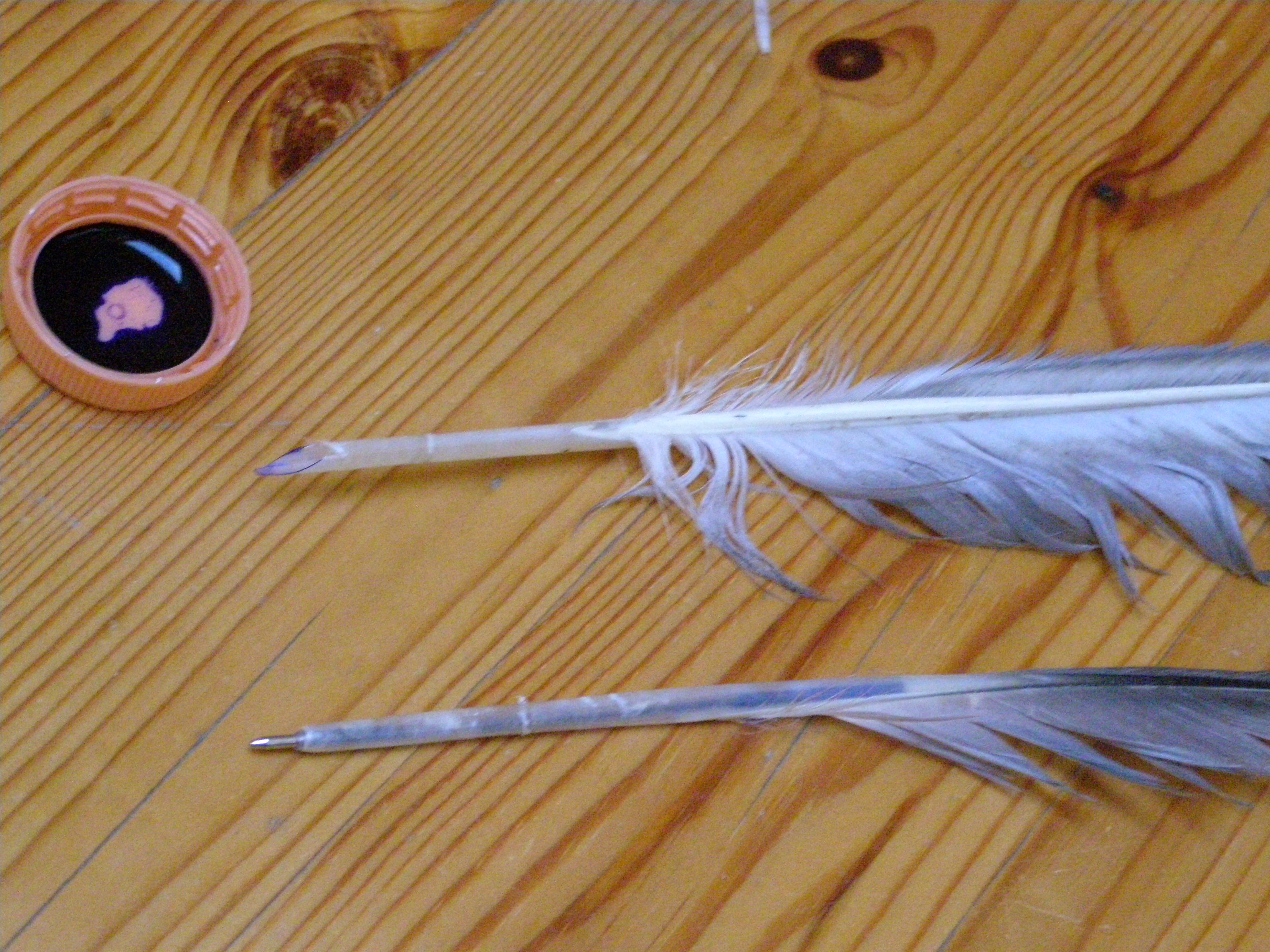 How to Make a Feather Quill (2 ways)