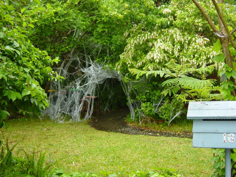 Giant Venomous Extinct Arachnid- Found Surviving in Australia