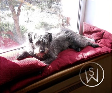 Window Board Dog Bed ...For a Dog