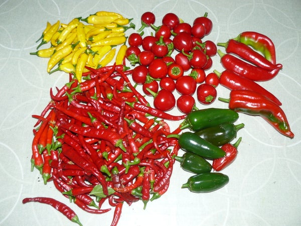 Preserving Chillies: Jam, Flakes, Powder