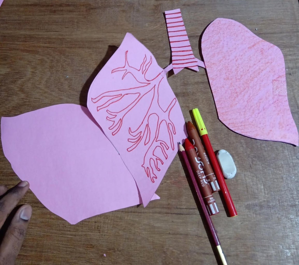 Layer 5 : Lungs