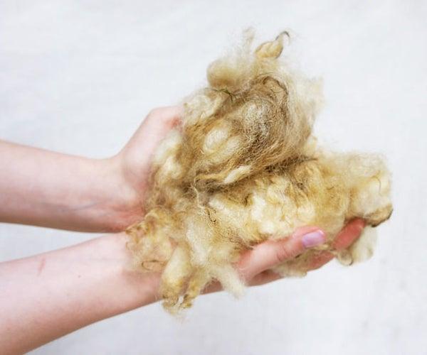 Scouring (Washing) Wool With Urine
